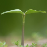 Growing Plant Symbolizing Increasing Value of Investment Portfolio